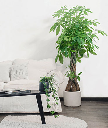 arbórea